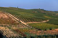 Italien, Piemont, Weinberge bei Monferrato