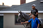 JUNE 06: Pavel with Leandro More walks through the barns at Belmont Park in Elmont, New York on June 06, 2019. Evers/Eclipse Sportswire/CSM
