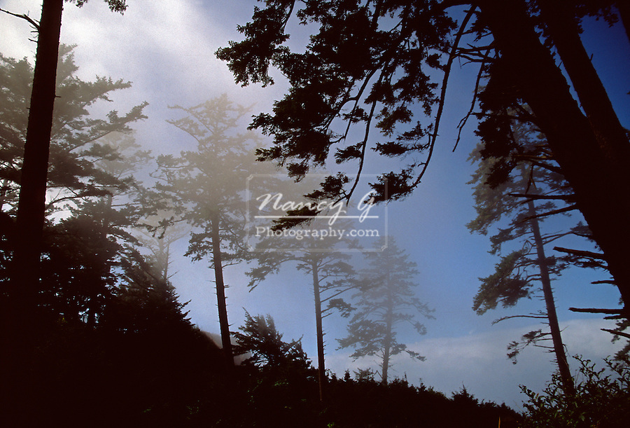Ecola State Park Oregon Fall trees in fog silhouette.