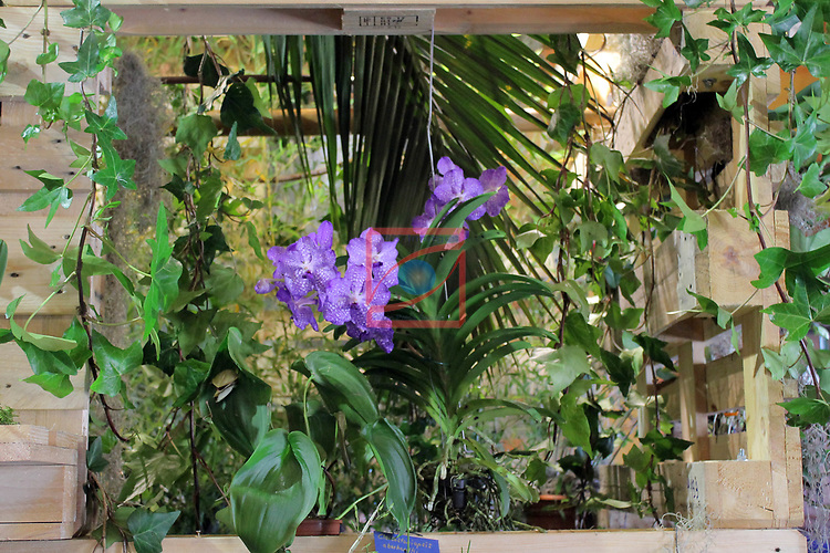 De Flor en Flor.<br /> Festival de Flors i Jardins de Barcelona.<br /> Del 13 al 17 d'abril d'enguany i al poble espanyol de Barcdelona tindra lloc aquest festival, en el que hi hauran entre altres exposicions de roses, orquidies i bonsais. Tambe hi trovareu divuit decoracions florals a diferents espais, tallers diversos i altres activitats  relacionades amb les flors, i musica en directe, a mes de les activitats habituals del Poble Espanyol.<br /> 30ena Exposicio d'Orquidies Exotiques de Barcelona.