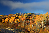 Mount Timpanogos points skyward above vibrant autumn foliage along the Alpine Loop road. Wasatch Mountains, Utah.