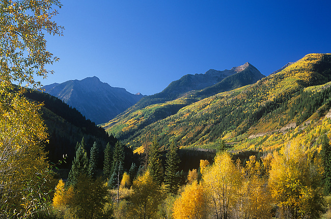 Chair Mountain, Aspen Trees, White River National Forest, Colorado