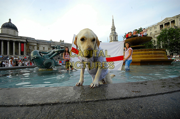 ENGLAND SUPPORTERS.Celebrate after England's win against Ecuador in the 2006 FIFA World Cup, Trafalgar Square, London, England, .June 25th 2006..full length fountain  football fans dog in football shirt top animal in water funny.Ref: IA.www.capitalpictures.com.sales@capitalpictures.com.©Ian Allis/Capital Pictures