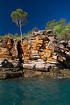 A Eucalyptus Tree atop sandstone in the Kimberley region of Western Australia
