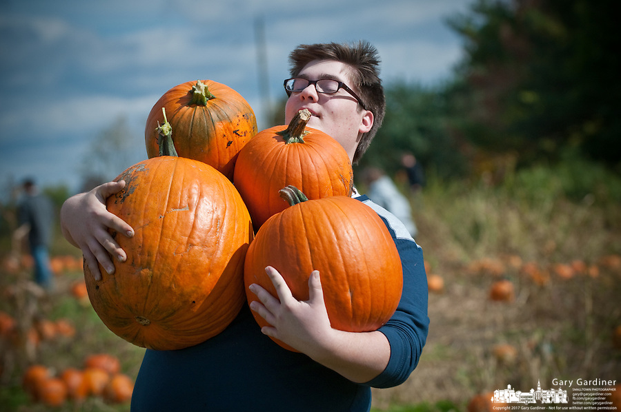 Customers carry armloads of pumpkins from a patch selling the fall staple at a single price for all you can carry.