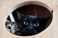 20190425 Neko Ngeru Cat Adoption Cafe