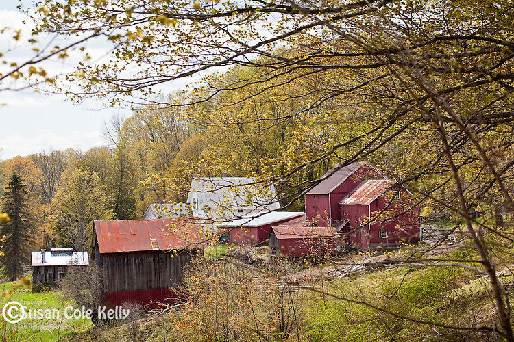 Elm Grove Farm in Pomfret, VT, USA