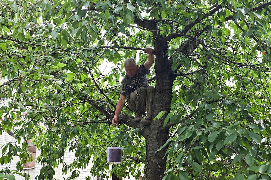 UKRAINE, Pisky: Yasin is picking some cherries from a cherry tree, just a few meters from the rear base. To get fruits is not very common on the frontline. The inly food and supplies that the soldiers receive are comong from civilian volunteers, not from the governement.<br /> <br /> UKRAINE, Pisky: Yasin cueillent quelques cerises &agrave; partir d'un cerisier, &agrave; situ&eacute; &agrave; quelques m&egrave;tres de la base arri&egrave;re. POuvoir manger des fruits n'est pas tr&egrave;s commun sur la ligne de front. La seule nourriture et biens que les soldats re&ccedil;oivent proviennent de volontaires civils, pas du gouvernement.