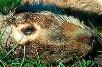 Dead rabbit, 1987.   &amp;#xA;<br />