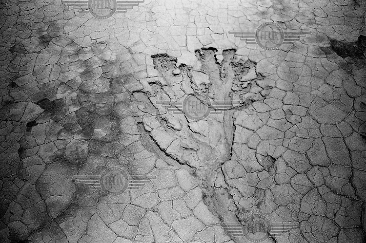 A trace of water in the Taklamakan desert. Walking 850 km in 34 days, Yann Mingard followed in the footsteps of explorers Ella Maillart and Peter Fleming, who travelled part of the Silk Road through Eastern Turkestan in 1935.