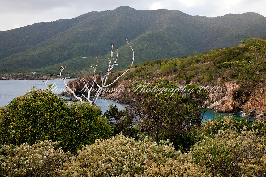 Scenic views and rocky cliffs along the<br /> Tektite trail near Lameshur Bay<br /> St John<br /> U.S. Virgin Islands
