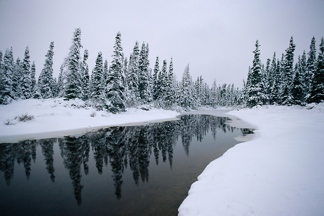 A small river winds its way through snow covered boreal forest. Labrador, Canada.