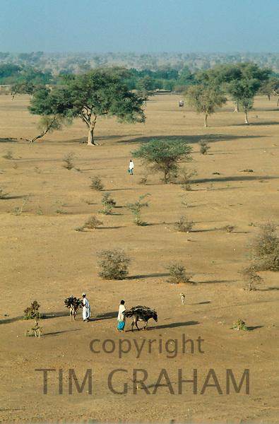 Gathering timber, Gorom Gorom, Sahara, Burkina Faso (formerly Upper Volta)