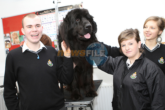 Jason McKenna, Kirsty Owens and Paulina Kurganovaite with Neo the Dog try their hands at Dog Grooming at the DIFE Open Day. ..(Photo credit should read Jenny Matthews www.newsfile.ie)....This Picture has been sent you under the conditions enclosed by:.Newsfile Ltd..The Studio,.Millmount Abbey,.Drogheda,.Co Meath..Ireland..Tel: +353(0)41-9871240.Fax: +353(0)41-9871260.GSM: +353(0)86-2500958.email: pictures@newsfile.ie.www.newsfile.ie.