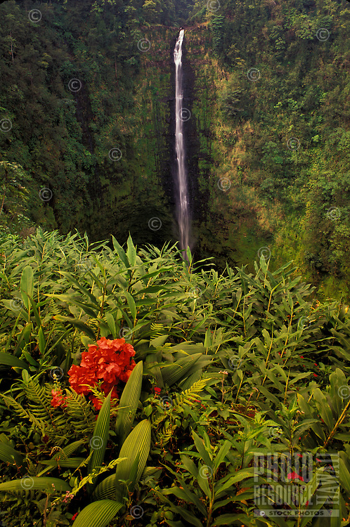 Akaka Falls framed by ginger, fern and bougainvillea. Big Island