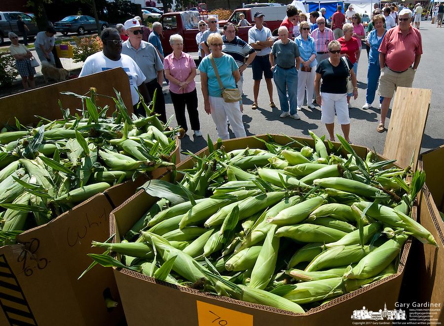 Customers gather around bins of sweet corn as a farmer prepares to open his stall at a locally grown market in a city parking lot. Locally grown fruit and vegetables are a staple item at small farmers markets..