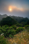 Sunset through coastal fog in hills along the old coast road, Big Sur Coast, Monterey County, California