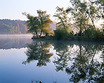 Petit Jean State Park, AR:  <br /> Sunrise light on willows and reflection on calm surface of Lake Bailey