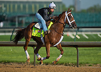 Goldencents, trained by Doug O'Neill, during morning workouts for the Kentucky Derby at Churchill Downs in Louisville, Kentucky on April 30, 2013.