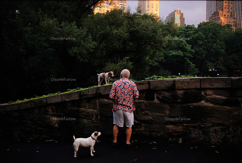 Dog walker in Frederick Law Olmsted's Central Park.
