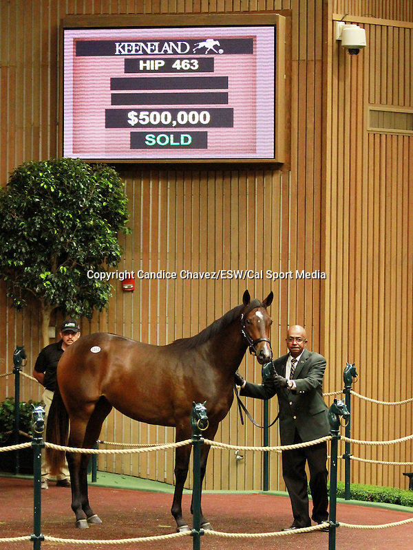 September 10, 2014: Hip #463 Kitten's Joy - Bala filly consigned by Hill 'n' Dale Sales, sold for $500,000 at the Keeneland September Yearling Sale.   Candice Chavez/ESW/CSM
