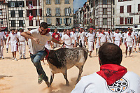 Europe/France/Aquitaine/64/Pyrénées-Atlantiques/Pays-Basque/Bayonne: Courses de vaches lors de Fêtes de Bayonne [Non destiné à un usage publicitaire - Not intended for an advertising use]