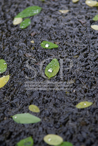 Yering Station, Australia. Raindrop on a leaf, on wet uneven paved ground.