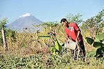Carlos Rios waters the crops in a community farm in El Bonete, a small village in northwestern Nicaragua.