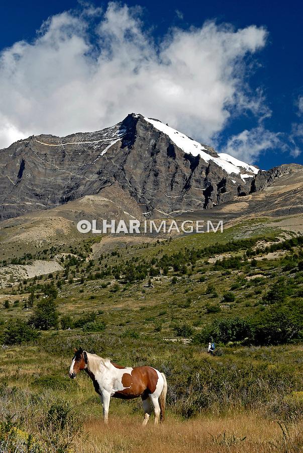 Cavalos na trilha. Parque Nacional Torres Del Paine. Chile. 2008. Foto de Renata Mello.