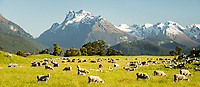 PANORAMA IMAGES | New Zealand