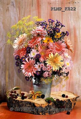 Marek, FLOWERS, BLUMEN, FLORES, photos+++++,PLMPK822,#f#