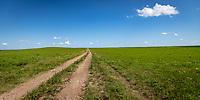 A dirt road through the Flint Hills of Kansas.