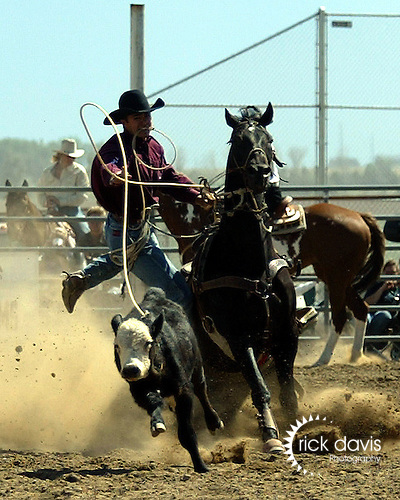 Darnel Johnson turns in a time of 14.1 seconds in tie down roping at the Southeast Weld County CPRA Rodeo in Keenesburg, Colorado on August 12, 2006.
