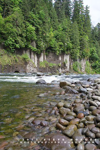 Wet rocks and riparian vegetation on the Sandy River, Oregon.