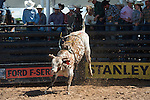 179 Bruce of Arianna Floyd/ Boyd-Floyd during the American Bucking Bull, Incorporated event in Decatur, TX - 6.3.2016. Photo by Christopher Thompson