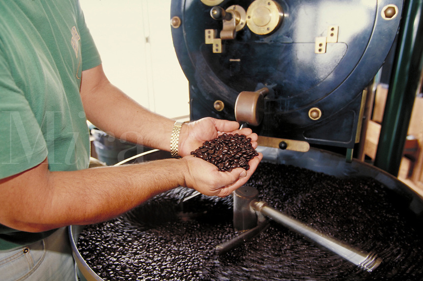 Chief coffee roaster at Bayview Farm examines freshly roasted Kona coffee beans in hopper of oven; Honaunau, Hawaii. Kailua-Kona Hawaii USA Big Island.