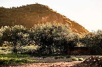 Luz del sol al atardecer travez del la monta&ntilde;a y los arboles de mesquite  en el Rancho eco tur&iacute;stico El Pe&ntilde;asco en el pueblo Magdalena de Kino. Magdalena Sonora. <br /> &copy;Foto: LuisGutierrrez/NortePhoto