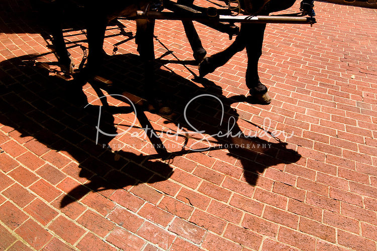 Horses cast their shadow at Charleston Place in Charleston, SC.