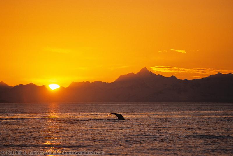 Mount Gilbert, humpback whale tail, sunset, Chugach Mountain range, Prince William Sound, Alaska
