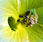 Botanical Candids