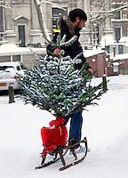 Man vervoert kerstboom op een slee. Sneeuw in Amsterdam
