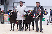 North Wales Show Potential sale at Ruthin Farmers auction Company,Ruthin,North Wales <br /> Picture Tim Scrivener 07850 303986<br /> ….covering agriculture in the UK….