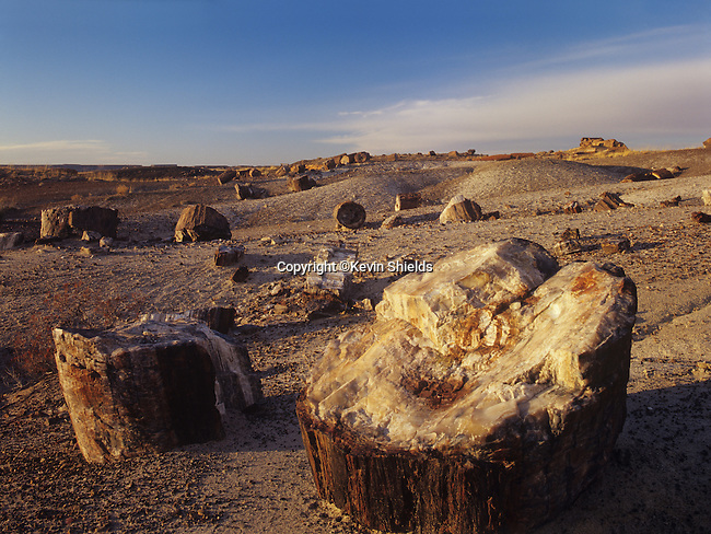 Sections of petrified logs at Petrified Forest National Park, Arizona, USA