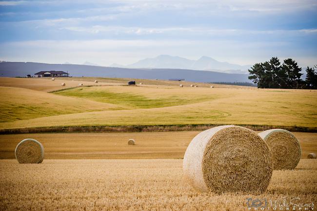 Field with haybales near Maheno, New Zealand