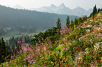 Wildflowers and the Tatoosh Range