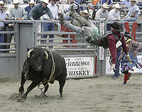 "29 August, 2004:  PRCA Rodeo Bull Rider Steven Balgeman gets thrown from  the bull ""Grumpy"" during the PRCA 2004 Extreme Bulls competition in Bremerton, WA."