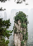 Mountain spire at Zhangjiajie National Forest Park, figgy nature scenery, Zhangjiajie, Hunan, China