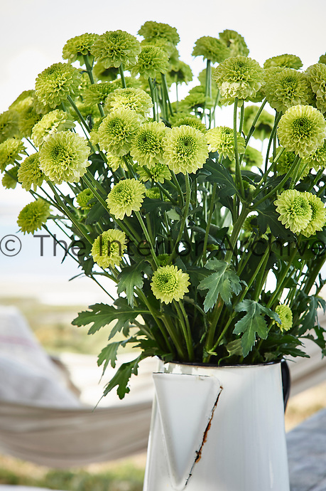 "Style: ""Canon Basic"" A flower arrangement of lime green flowers in a white enamel jug vase."