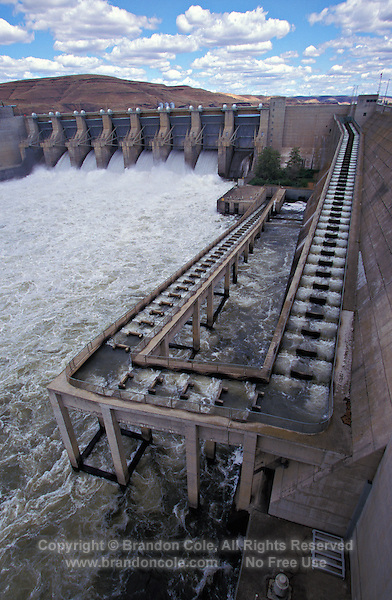 mo168. fish ladder on Lower Monumental Dam. Snake River, WA, USA. Salmon returning upriver to spawn bypass many dams via these man-made waterways..Photo Copyright © Brandon Cole. All rights reserved worldwide.  www.brandoncole.com..This photo is NOT free. It is NOT in the public domain. This photo is a Copyrighted Work, registered with the US Copyright Office. .Rights to reproduction of photograph granted only upon payment in full of agreed upon licensing fee. Any use of this photo prior to such payment is an infringement of copyright and punishable by fines up to  $150,000 USD...Brandon Cole.MARINE PHOTOGRAPHY.http://www.brandoncole.com.email: brandoncole@msn.com.4917 N. Boeing Rd..Spokane Valley, WA  99206  USA.tel: 509-535-3489