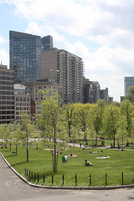 The Boston Common, Boston hi-rise buildings